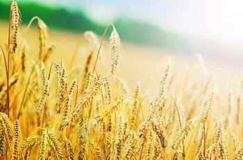 Кредит под залог земли сельхозназначения в Тюмени